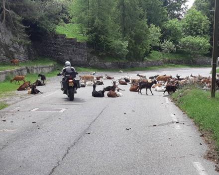 Oostenrijk Motorreizen