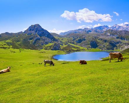 Costa Verde / Picos de Europa